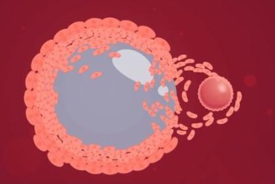 西安不孕不育医院,促排卵的治疗过程