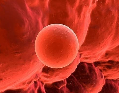 什么样的卵泡更易受孕