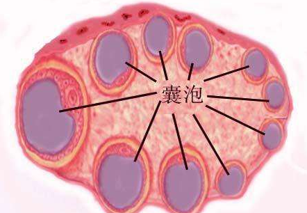 多囊卵巢有哪些症状
